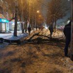 После инцидента с упавшим на женщину деревом в Кирове проверят состояния придомовых территорий