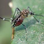 Четыре жителя Кировской области заболели лихорадкой после поездки в Таиланд
