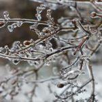 На неделе жителей Кировской области ждут ледяные дожди и переменчивая погода