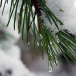 На неделе жителей Кировской области ожидает потепление до +1°С