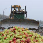 В Кирове изъято и уничтожено более тонны «санкционных» овощей и фруктов