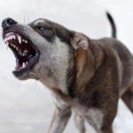 В Уржумском районе обнаружили бешенство у домашней собаки