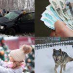 Итоги недели: смертельные аварии на трассе «Вятка», рейтинг зарплат и волки в поселках Кировской области