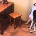 В Кировской области введены штрафы за шум, исходящий от домашних животных в ночное время