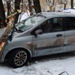 В Кирове на припаркованный во дворе автомобиль упало дерево