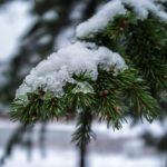 На рабочей неделе жителей Кировской области ожидают плюсовые температуры и дождь