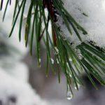 В выходные в Кировской области ожидаются плюсовые температуры и осадки