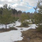 В Юрьянском районе пресечено систематическое неисполнение требований земельного законодательства