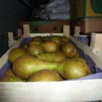 В Кирове уничтожили 600 кг груш из Польши