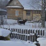 В Кировской области лось полдня гулял по поселку