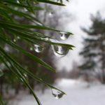 На следующей неделе жителей Кировской области ожидает очередное потепление