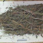 В Мурашинском районе у мужчины обнаружили маковую соломку: возбуждено уголовное дело