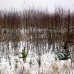 В Кирове оштрафовали собственника за заросший земельный участок