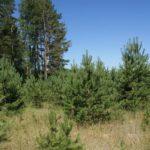 В Лебяжском районе мужчина оштрафован на 580 тысяч рублей за нарушение земельного законодательства