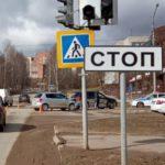 В Кирово-Чепецке столкнулись «Фольксваген» и «Шкода»: пострадал один человек