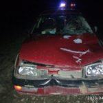 В Яранском районе водитель «Фольксвагена» сбил лося: после удара животное отбросило под еще один автомобиль