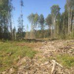 В Кировской области будут судить участников ОПГ за незаконную рубку леса