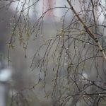 Снег с дождем и первая гроза: синоптики рассказали о погоде в Кировской области на выходные