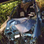 В Котельничском районе водитель «Шевроле» сбил лося