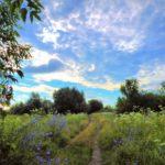 29 мая в Кировской области ожидается переменная облачность и +19°С