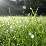 Погода в Кировской области: синоптики обещают +17°С и небольшой дождь