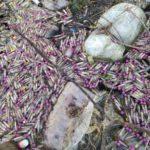 На берегу Вятки найдены пробирки с кровью и медицинские отходы