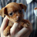 Кировчанка продавала в сети несуществующих щенков