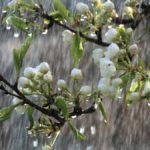 Синоптики рассказали, какая погода ожидает жителей Кировской области на неделе