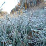 В начале лета жителей Кировской области ждет резкое похолодание, вплоть до заморозков