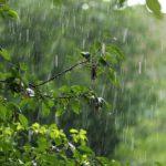28 июня в Кировской области ожидаются дожди