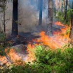 МЧС предупредило жителей Кировской области о высокой пожарной опасности