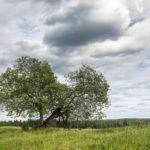 2 июня столбики термометров в Кировской области не поднимутся выше +13°С