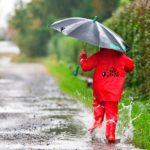 В субботу в Кировской области ожидаются дожди и грозы