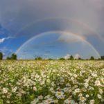 В понедельник жителей Кировской области ожидают дожди и грозы