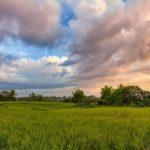 Облачно с прояснениями и +20°С: погода на 17 июня в Кировской области