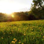 На неделе в Кировскую область придет потепление до +21°С