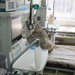В Кировской области от коронавируса умерли двое мужчин
