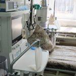 В Кировской области умер мужчина с коронавирусом