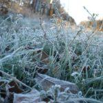 В Кировской области ожидаются заморозки до -2°С
