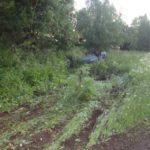В Слободском районе водитель «ВАЗа» опрокинулся в кювет: пострадали 3 человека