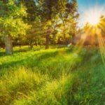 Синоптики рассказали, какая погода ожидает жителей Кировской области в среду, 29 июля
