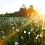 В понедельник жителей Кировской области ожидает кратковременная гроза и +27°С