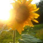 8 июля жителей Кировской области ожидает жара до +33°С