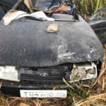 На трассе «Вятка» при столкновении с лосем погиб водитель «ВАЗа»