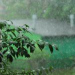 Всё воскресенье в Кировской области будут идти сильные дожди и грозы