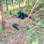 В Кировской области в лесу обнаружены останки мужчины, обглоданные зверем