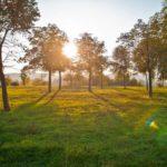 Синоптики рассказали, когда на неделе ожидать потепления в Кировской области