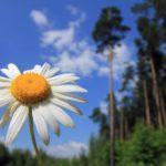 В четверг жителей Кировской области ожидает теплый и солнечный день