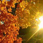 В Кировской области ожидается солнечная и относительно теплая неделя