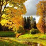 +11°С и без осадков: погода в Кировской области на четверг, 17 сентября